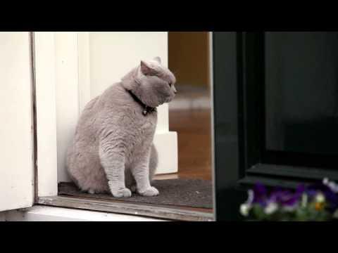 Cat Gijs The Movie Cute Kitten British Shorthair