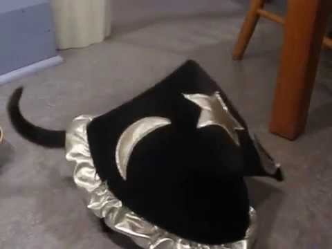 When Bombay Cat wear witch hat... Cute