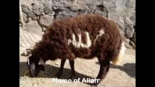 Signs Allah Nature