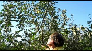 New Jersey Apple Pickin` at Melicks Farm in Califon New Jersey