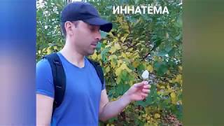 Фокус - покус пиндерокус )) юмор