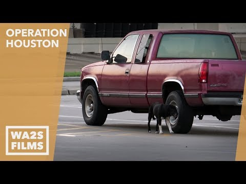 Hope For Paws Rescue This Stray Dog Before Hurricane Harvey Flooded Houston K 911: Operation Houston