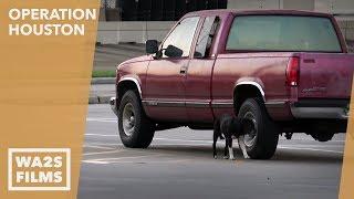 Houston K-911 Rescue Save Dog Before Hurricane Harvey Slammed Houston - Howl & Hope For Dodo Dogs