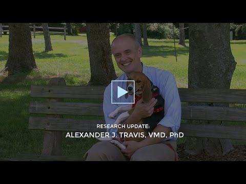 Baker Institute Research Highlight: World's first in vitro puppies born at the Baker Institute