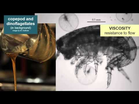 Light, Viscosity, & Pressure in the Oceans