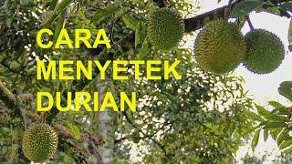 Video Cara Menyetek Durian download MP3, 3GP, MP4, WEBM, AVI, FLV Juli 2018