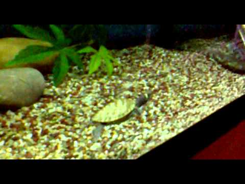 Cute Baby Turtles At Pet Shop Youtube