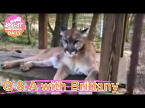 Q & A with Brittany~ 3.7.2019