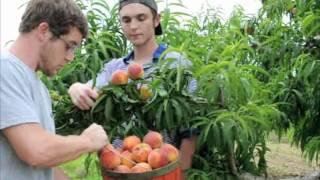 Plant Georgia Peach Trees - Eat Peach Ice Cream This Year,    Tv Ad 2014