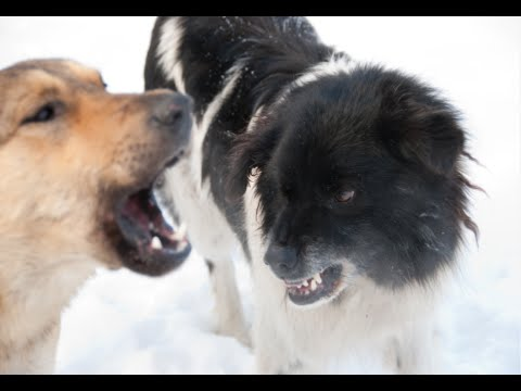 how-to-stop-your-dog-from-barking-at-other-dogs