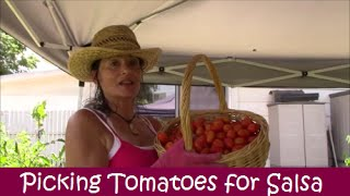 Picking Roma Tomatoes For Salsa