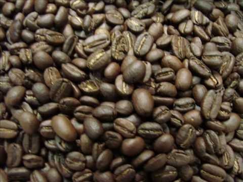 Babylon Zoo Caffeine