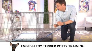 English Toy Terrier Potty Training from WorldFamous Dog Trainer Zak George  Toy Terrier Puppy