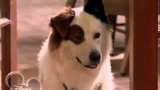 Собака точка ком   1 сезон, 7 1 серия