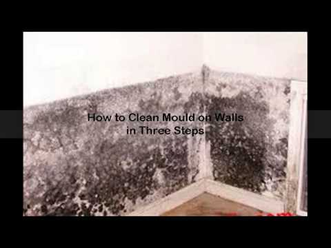 how-to-get-rid-of-mold-on-walls
