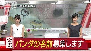 赤ちゃんパンダに名前をつけて! 28日から公募へ(17/07/07) thumbnail