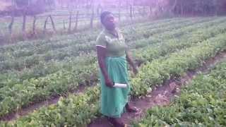 Edith Kanengoni - A Role Model Female Farmer in Zimbabwe