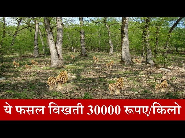 Gucchi Farming-?? ??? ????? ?? 30000 ???? ????? ???? | ?????? ?? ???? | Smart Business Plus
