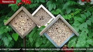 Смотреть видео В Москве появятся домики для насекомых / новости дня, итоги онлайн