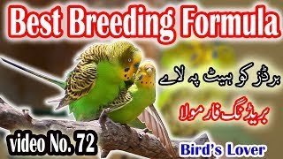 how to make your birds ready for breed.  breeding formula,   Video No 72
