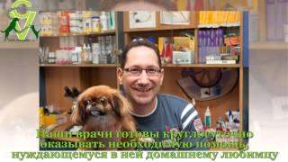 видео ветеринарная клиника в ясенево
