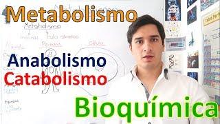 Metabolismo y Rutas metabólicas (Anabolismo y Catabolismo) EN 11 MINUTOS!