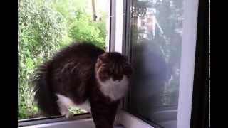 кот отказывается жрать