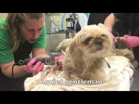 Abandoned Puppy Mill Dogs Rescued