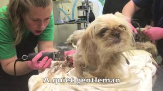 Video Abandoned Puppy Mill Dogs Rescued download MP3, 3GP, MP4, WEBM, AVI, FLV Oktober 2018