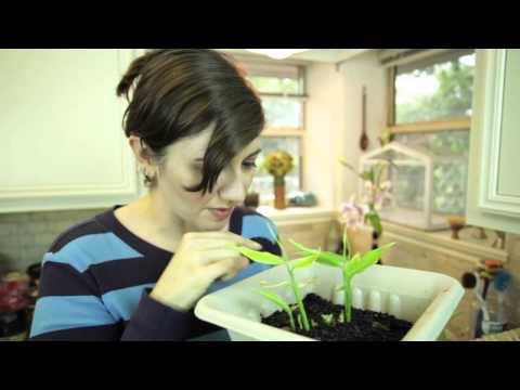 Jumpstart Your Garden: Regrow Vegetable Food Scraps