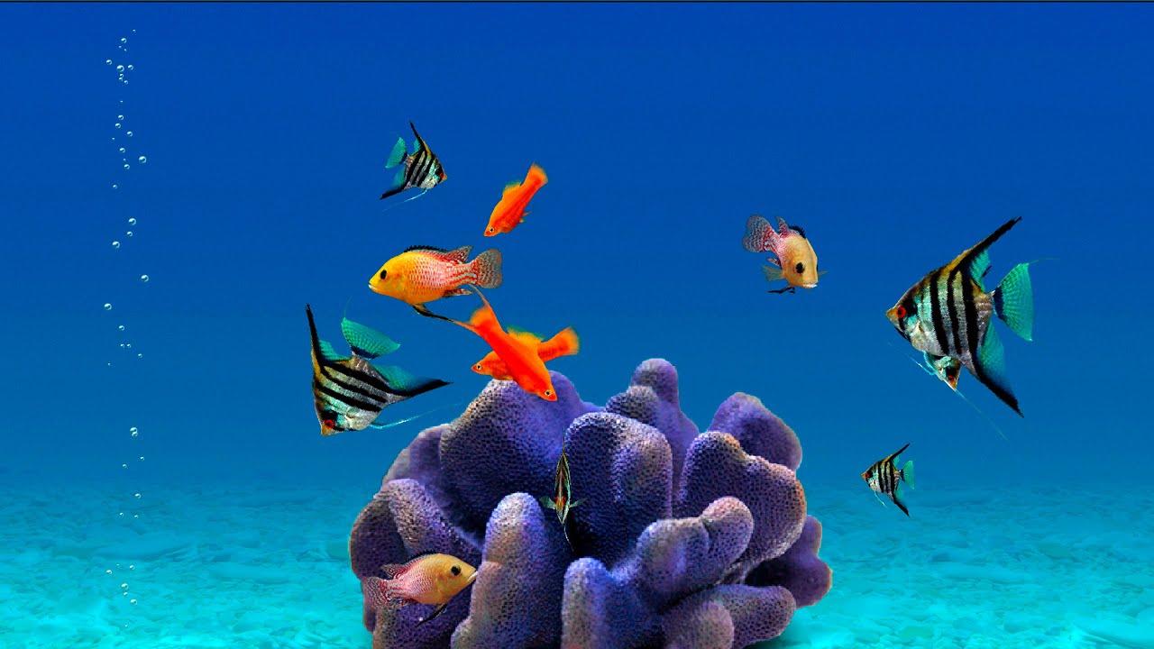 Скачать симулятор аквариума через торрент