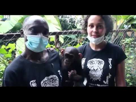 Tiny Chimp found malnourished and rescued by Lwiro and ICCN