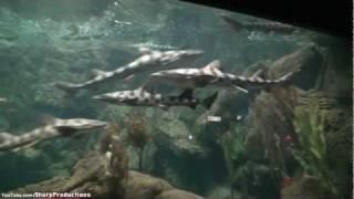 World of the Sea Aquarium at SeaWorld San Diego