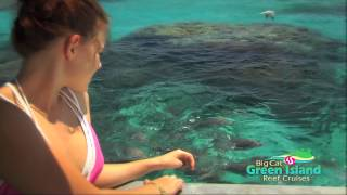 Big Cat Green Island Glass Bottom Boat - 30 second Thumbnail