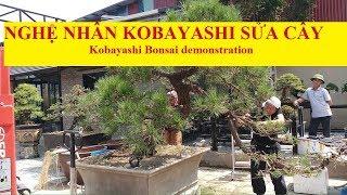 Xem nghệ nhân Kunio Kobayashi làm cây/Kunio Kobayashi Bonsai demonstration