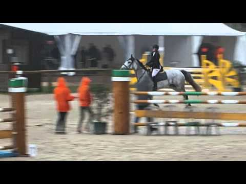 Phacelia Am1 GP 120 Fontainebleau