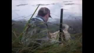 Охота с Лабрадором-ретривером на утку