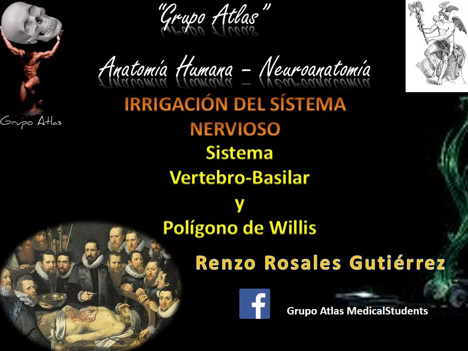 Arteria basilar y poligono de Willis - Grupo Atlas - YouTube