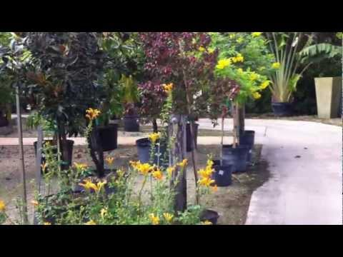 Touring Gorgeous South FL Living Color Garden Center - Part 3 of 3