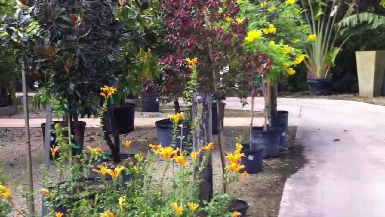 touring gorgeous south fl living color garden center part 3 of 3 youtube