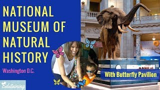Smithsonian National Museum of Natural History | Vlog