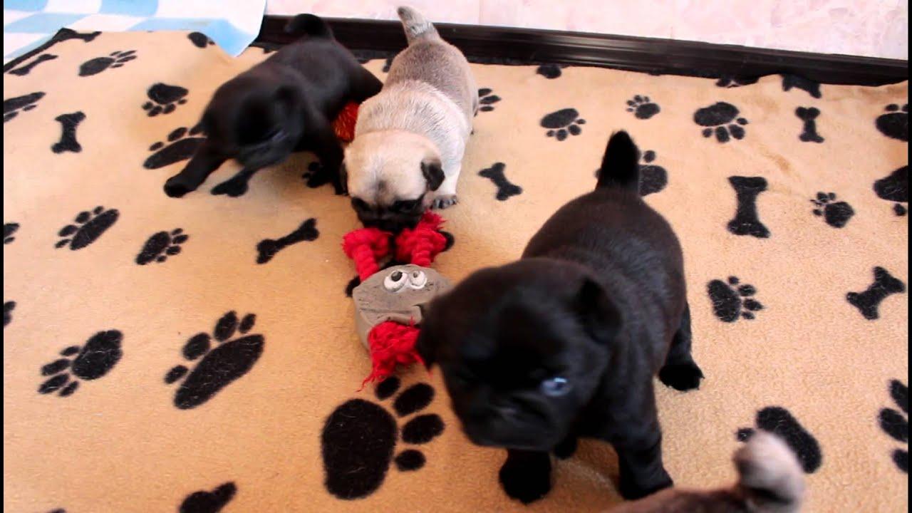Купить или заказать валяный щенок лабрадора 'арлетт' в интернет магазине на ярмарке мастеров. Малышка выполнена в технике сухого валяния.