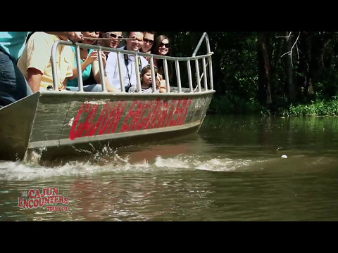 Cajun Bayou & Swamp Tour - New Orleans - Video