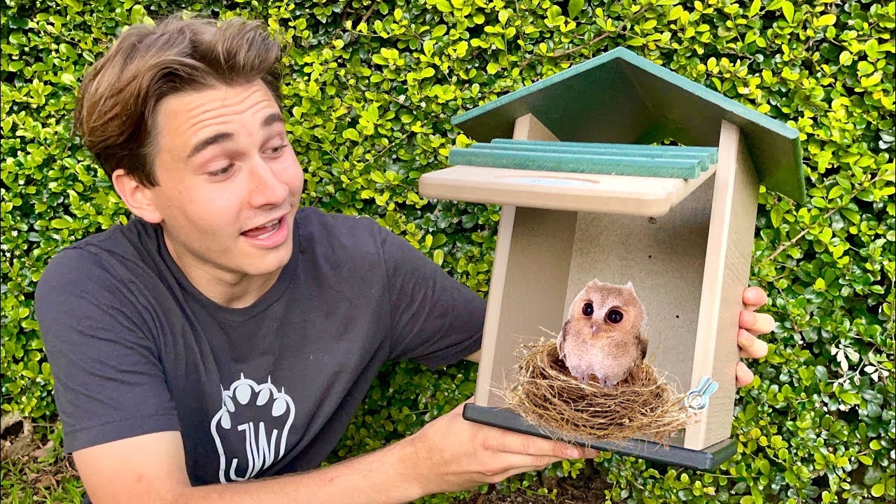 SURPRISING MY BABY OWLS WITH NEW NEST BOXES ! WILL THEY LIKE IT ?!