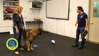 Akc Canine Good Citizen Test9: Reaction To Distraction
