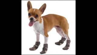 Размер обуви для собак