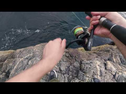 Fishing Mackerel From The Shore With Home Made Fishing Rig - Bergen, Norway
