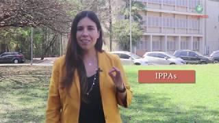 Cepea lança novos Índices de Preços ao Produtor