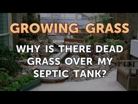 Why Is There Dead Grass Over My Septic Tank?