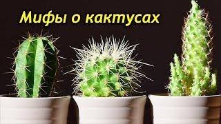 КАКТУСЫ. Мифы о кактусах, которые следует давно развеять…